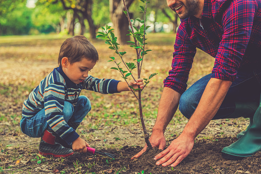 father and son planting a tree in the garden