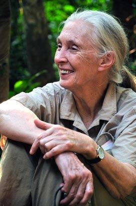 copyright the Jane Goodall Institute