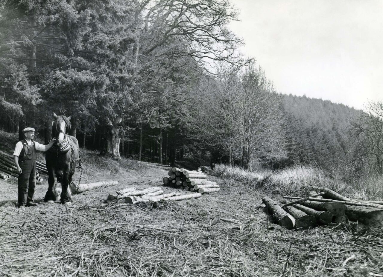 100 Years of the Forestry Commission in Britain